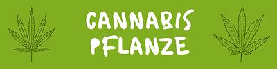 Cannabis%20Pflanze-Arten