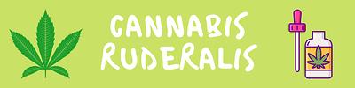 Cannabis%20ruderalis%20-%20guide