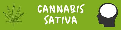 Cannabis%20sativa%20guide