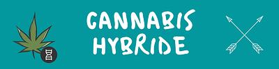 cannabis%20hybride%20guide