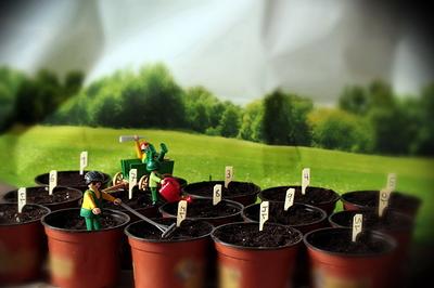 2007 Seeds _02_07_VT001